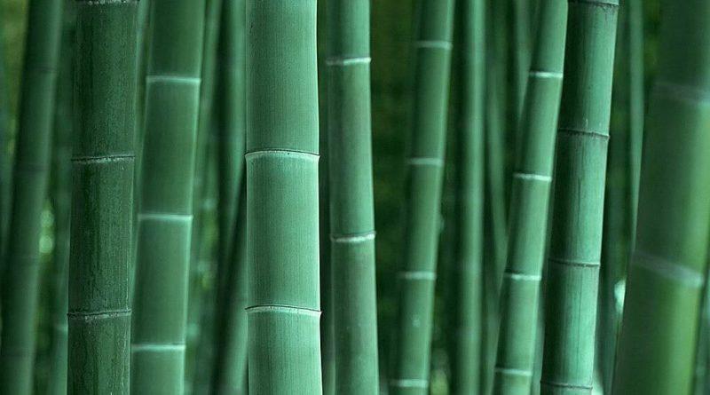 PELATIHAN Struktur Kayu dan Bambu